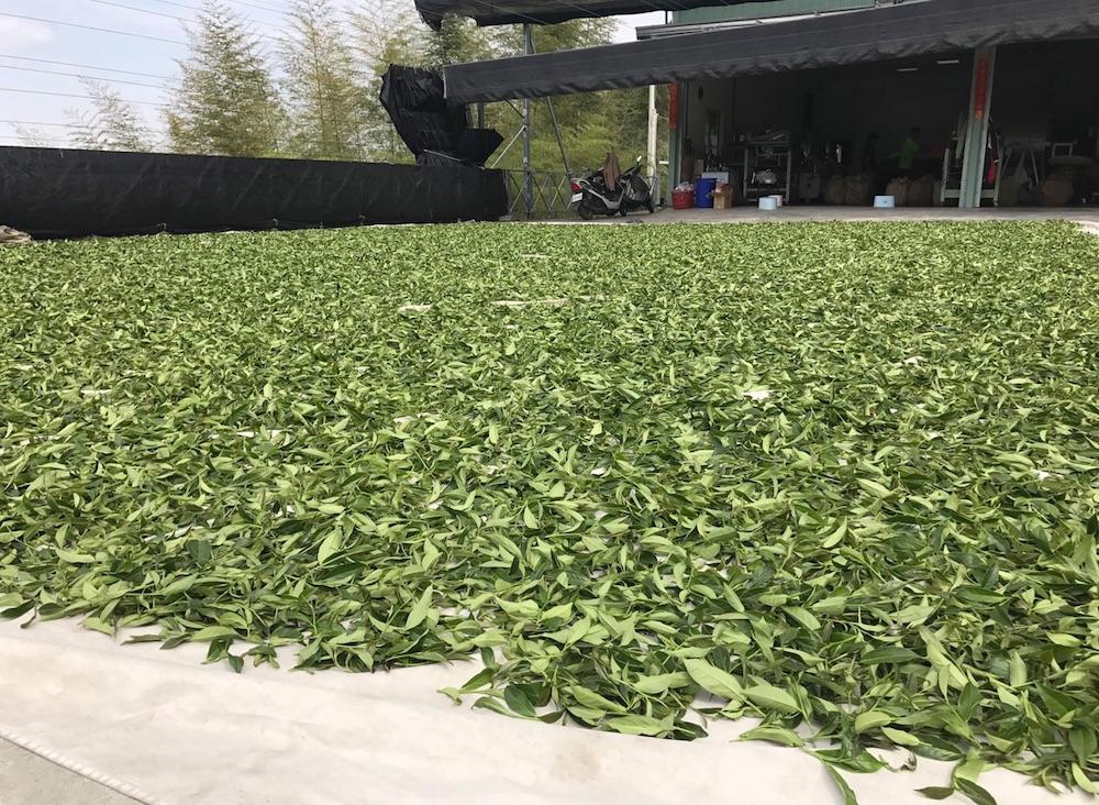 台湾茶生産